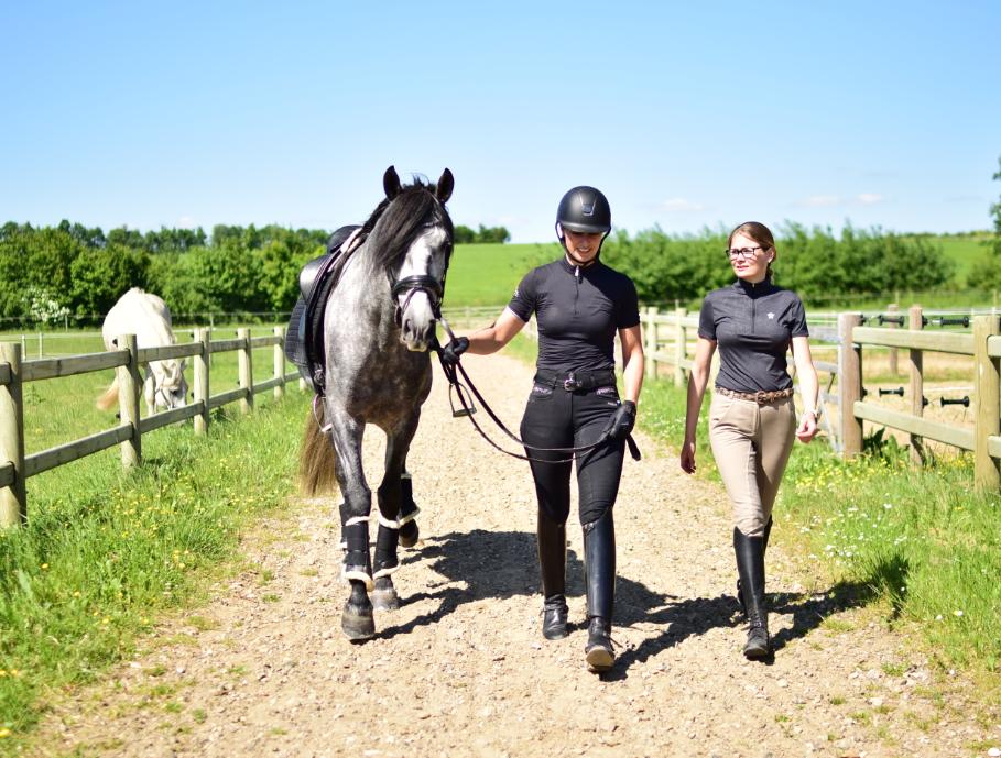 Hest i træning